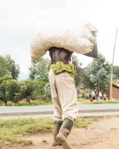 Bag full of carrots being taken to the river to be washed. Musanze District, North West Rwanda